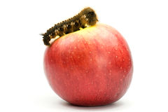 Caterpillar on top of a red apple Stock Photography