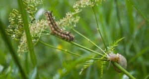 Caterpillar und Schnecke nach Regen Lizenzfreie Stockfotografie