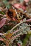 Caterpillar vänder mot Arkivbild