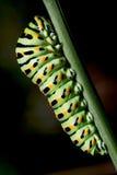 Caterpillar van a Royalty-vrije Stock Foto's