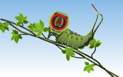 Caterpillar - Vector Royalty Free Stock Photo