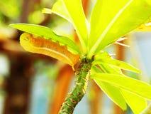 Caterpillar Stock Image