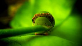 Caterpillar. Walking on leaf   bug insect nature naturelover green day spring starring stock photo