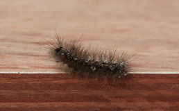 Caterpillar and  water. On the wood Royalty Free Stock Photos
