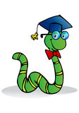Caterpillar wear graduation hat. Illustration of the cheerful scholar caterpillar wear graduation hat on an isolated white background Royalty Free Stock Photos