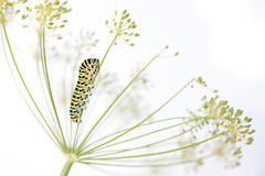 Caterpillar on white background Stock Photo