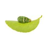 Caterpillar on white background Stock Photos
