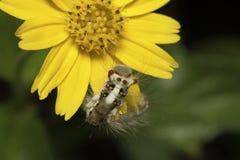 Caterpillar y flor amarilla Foto de archivo