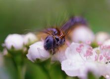 Caterpillar y flores Imagen de archivo