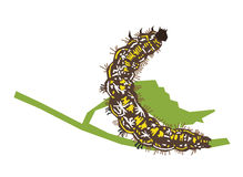 Caterpillar - zygaena Stock Afbeelding