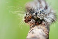 caterpillarcloseuphuvud s Fotografering för Bildbyråer