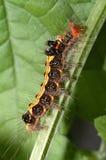 caterpillarfärg royaltyfria bilder
