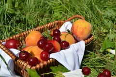 Caterpillarfruits in a basket on the green grass. Fruits in a basket on the green grass Stock Photo