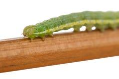 caterpillargreen Fotografering för Bildbyråer