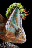 caterpillarkameleonthuvud s Royaltyfri Bild
