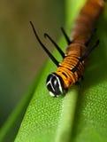 caterpillarleaf Arkivbild