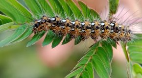 caterpillars images libres de droits