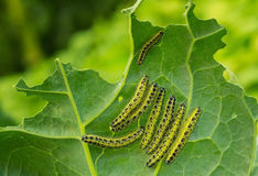 caterpillars image stock