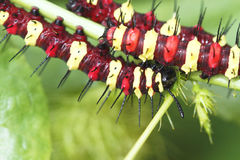 caterpillars photographie stock libre de droits