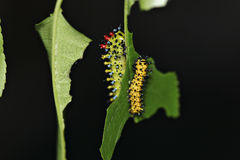 caterpillars royaltyfri bild