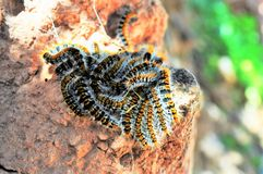caterpillars images stock