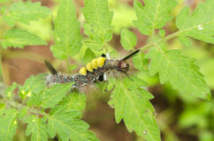 caterpillars photo stock