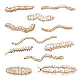 Caterpillars, earthworms, slug and centipedes Stock Photography