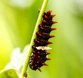 Caterpillars in the forest. On green grass in nature royalty free stock photo