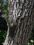 Caterpillars. I was walking in the park and I touched the tree and felt the amass and I took a picture stock photos