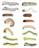 Caterpillars  larvae diversity. Insects isolated Royalty Free Stock Image