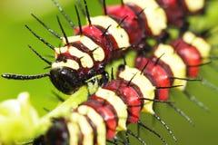Caterpillars Royalty Free Stock Photography
