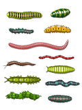 Caterpillars and worms Stock Image