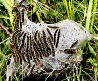 caterpillarskokong Arkivbild