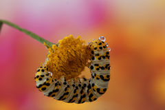 CATERPILLER Royalty Free Stock Image