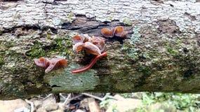 Caterpiller rode kleur dichtbij met verse paddestoelen Stock Foto's