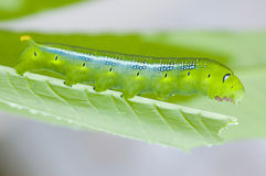 Caterpilllar Stock Image