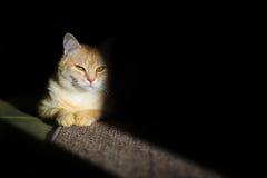 Catfather 库存照片