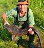 Catfish 2 Stock Images