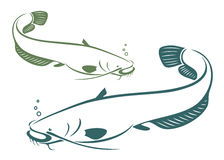 Catfish. Vector illustration of catfish in green and blue Royalty Free Stock Photos