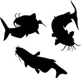 Catfish Royalty Free Stock Photography