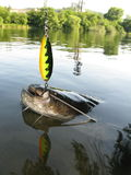 Catfish. Big one catfish catched on river Royalty Free Stock Images