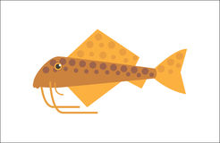 Catfish flat illustration. Aquarium fish. Catfish flat illustration. The inhabitants of marine reef aquariums and ponds Royalty Free Stock Image