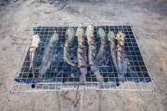 Catfish Grill On charcoal grill. Royalty Free Stock Photo