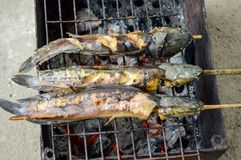 Catfish are grilled with charcoal Stock Image