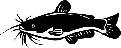 Catfish Illustration. Line Art Illustration of a Catfish Stock Images
