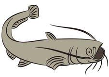 Catfish illustration on white Royalty Free Stock Images