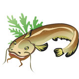 Catfish with salad, vector food. On white background vector illustration