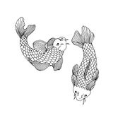 Catfish seafood image. Catfish fish image. Hand drawn  stock illustration. Black and white whiteboard drawing Stock Image