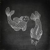 Catfish seafood image. Catfish fish image. Hand drawn  stock illustration. Chalk board drawing Royalty Free Stock Images