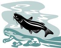 Catfish swimming up Stock Images